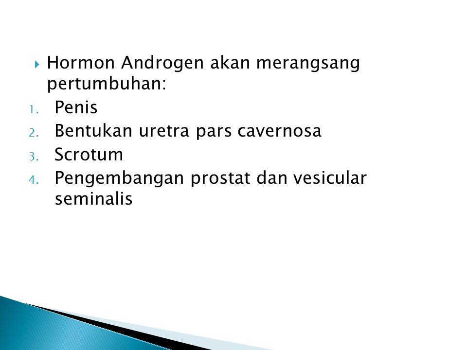Hormon Androgen akan merangsang pertumbuhan: