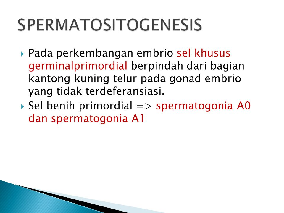 SPERMATOSITOGENESIS