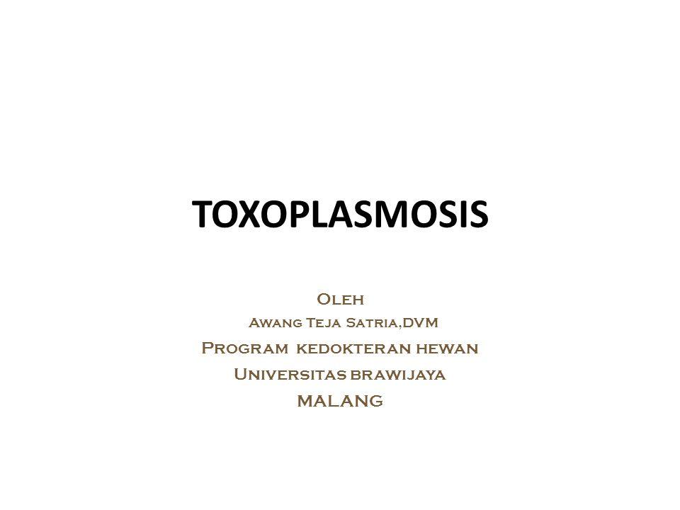 TOXOPLASMOSIS Oleh Program kedokteran hewan Universitas brawijaya