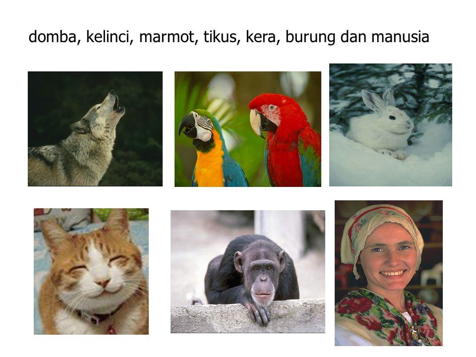 domba, kelinci, marmot, tikus, kera, burung dan manusia