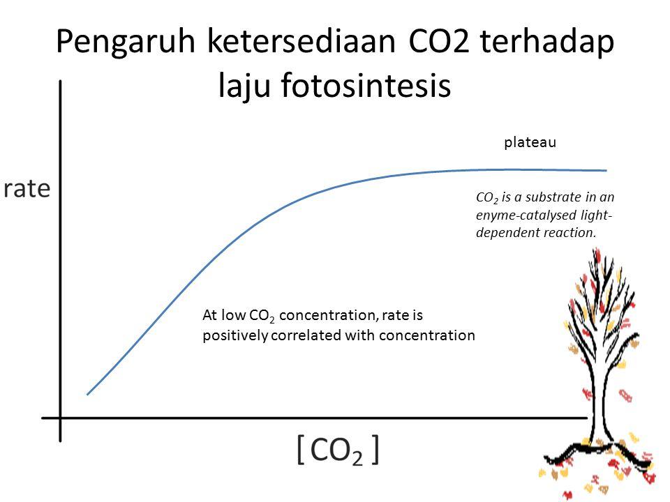 Pengaruh ketersediaan CO2 terhadap laju fotosintesis
