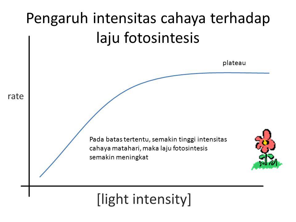 Pengaruh intensitas cahaya terhadap laju fotosintesis