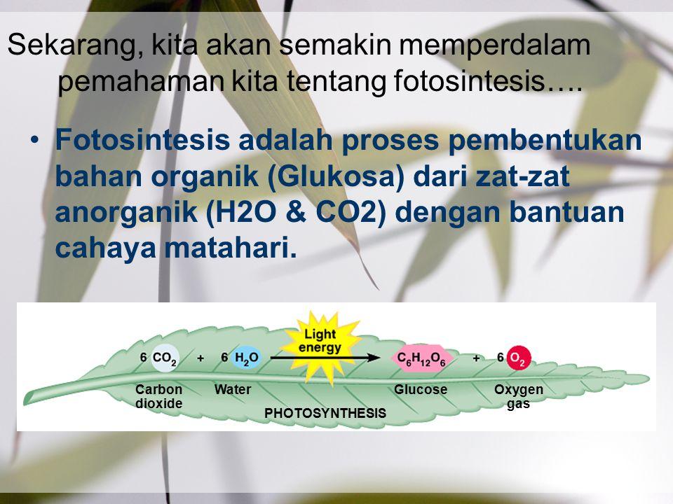 Sekarang, kita akan semakin memperdalam pemahaman kita tentang fotosintesis….