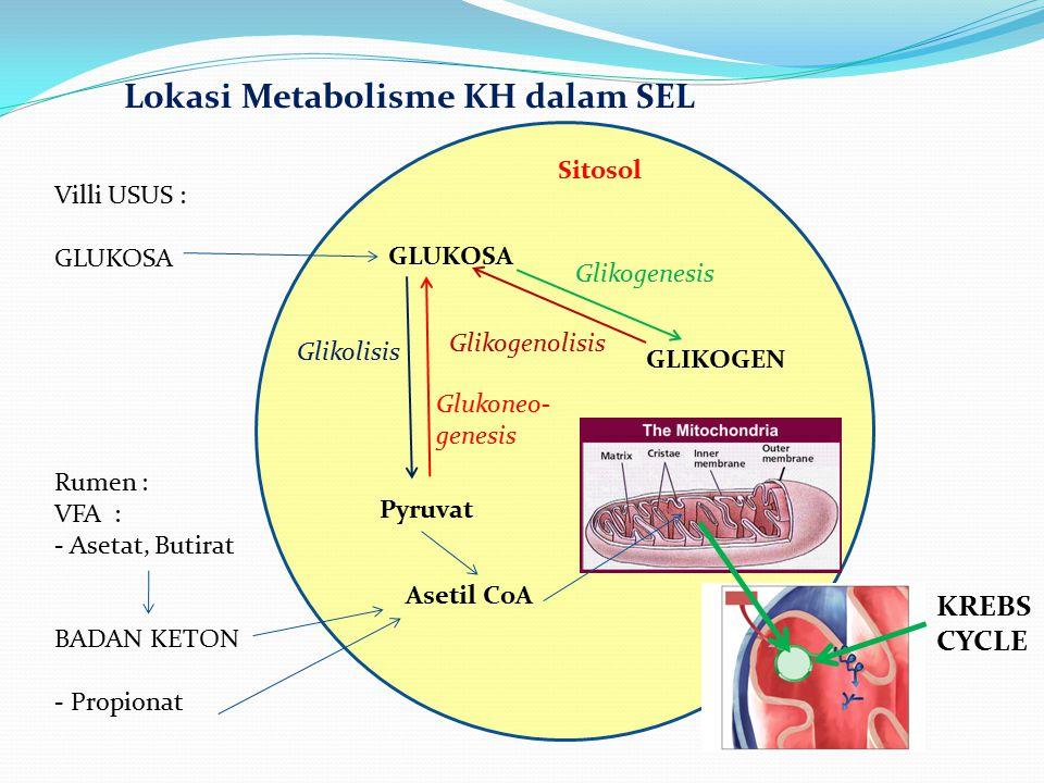 Lokasi Metabolisme KH dalam SEL