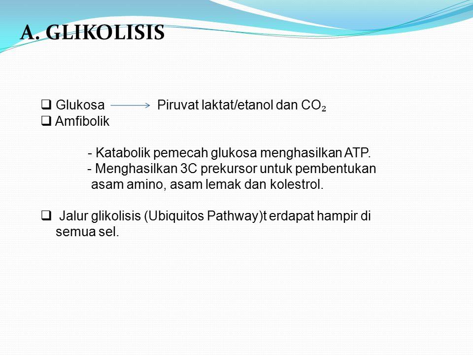 A. GLIKOLISIS Glukosa Piruvat laktat/etanol dan CO₂ Amfibolik
