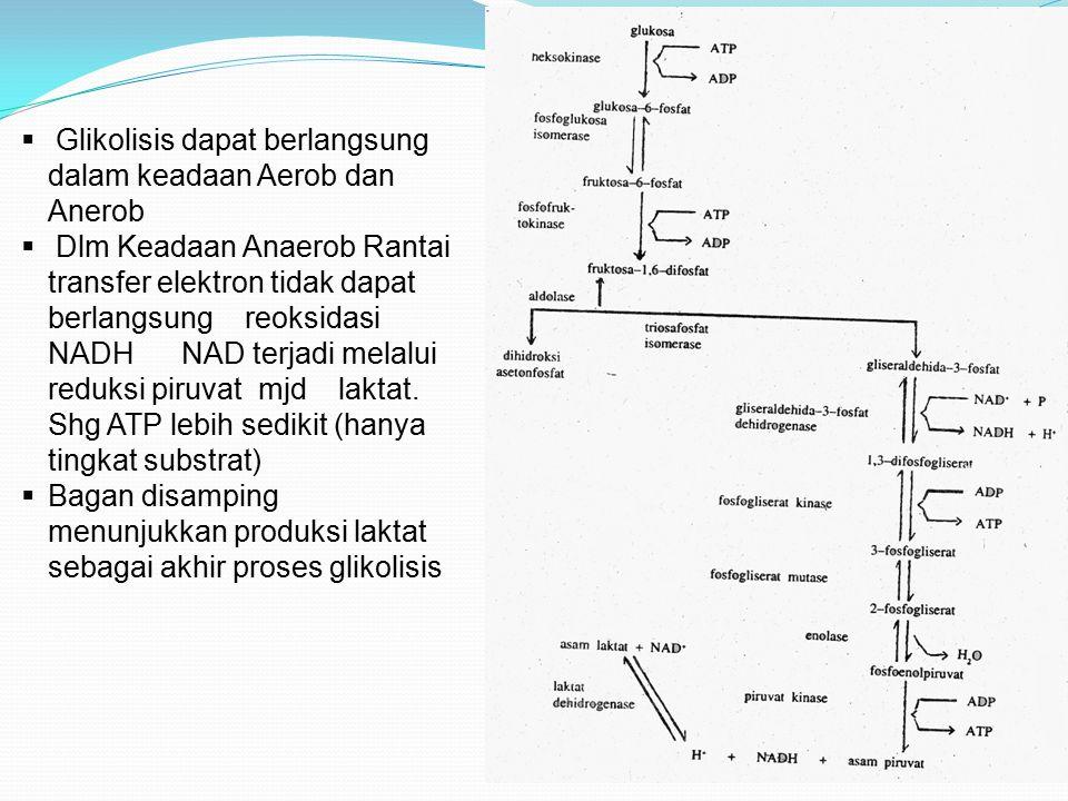 Glikolisis dapat berlangsung dalam keadaan Aerob dan Anerob