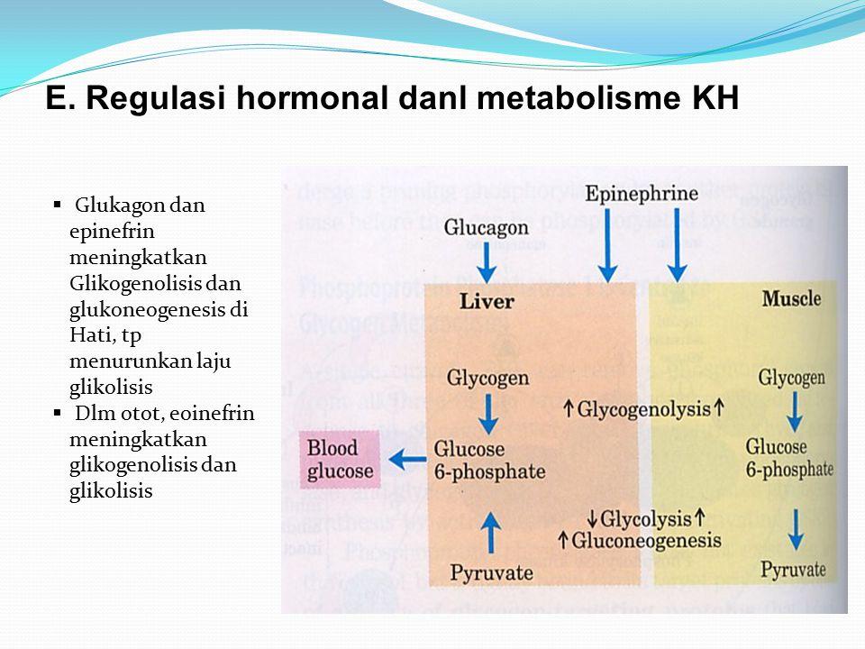 E. Regulasi hormonal danl metabolisme KH
