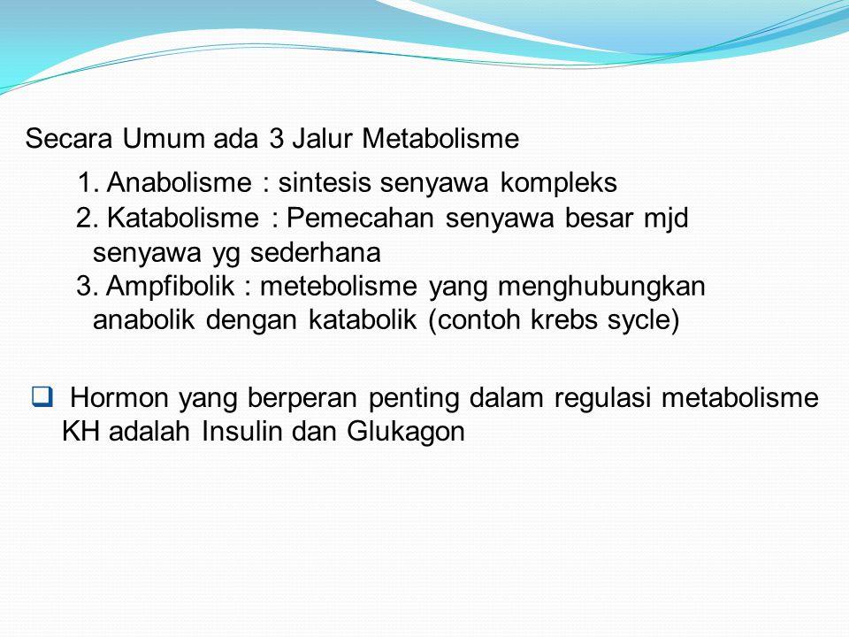 Secara Umum ada 3 Jalur Metabolisme