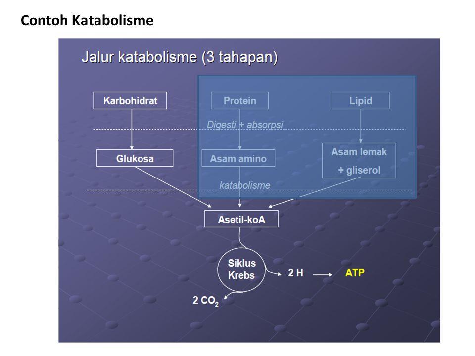 Contoh Katabolisme