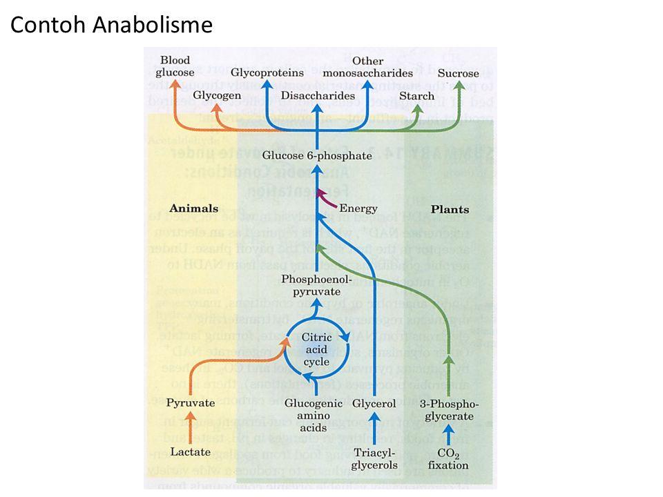 Contoh Anabolisme
