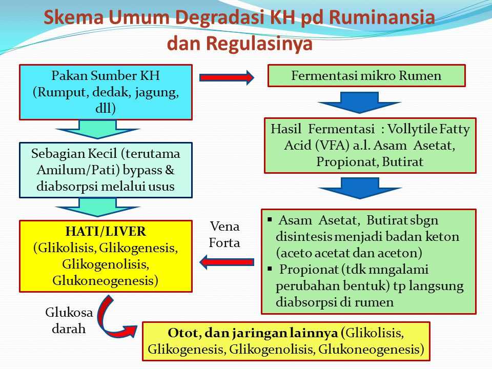 Skema Umum Degradasi KH pd Ruminansia dan Regulasinya
