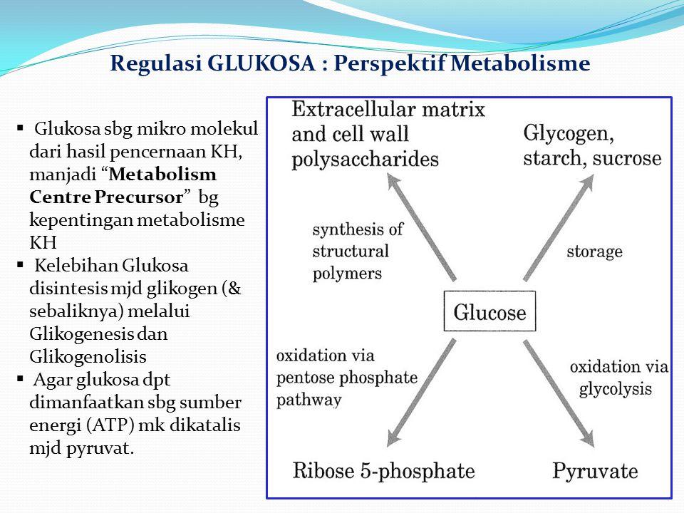 Regulasi GLUKOSA : Perspektif Metabolisme