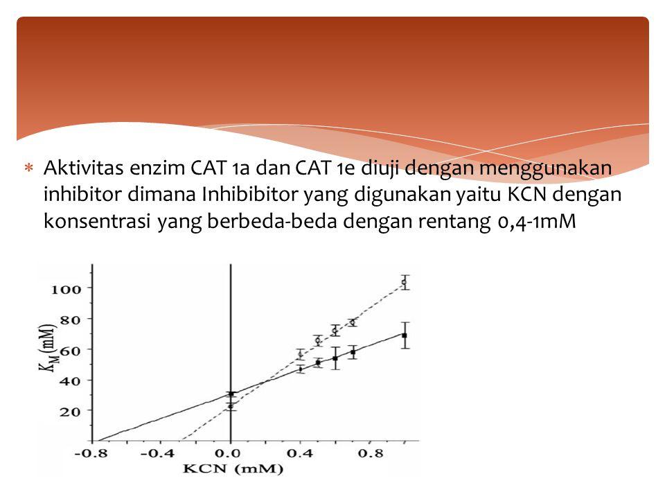 Aktivitas enzim CAT 1a dan CAT 1e diuji dengan menggunakan inhibitor dimana Inhibibitor yang digunakan yaitu KCN dengan konsentrasi yang berbeda-beda dengan rentang 0,4-1mM