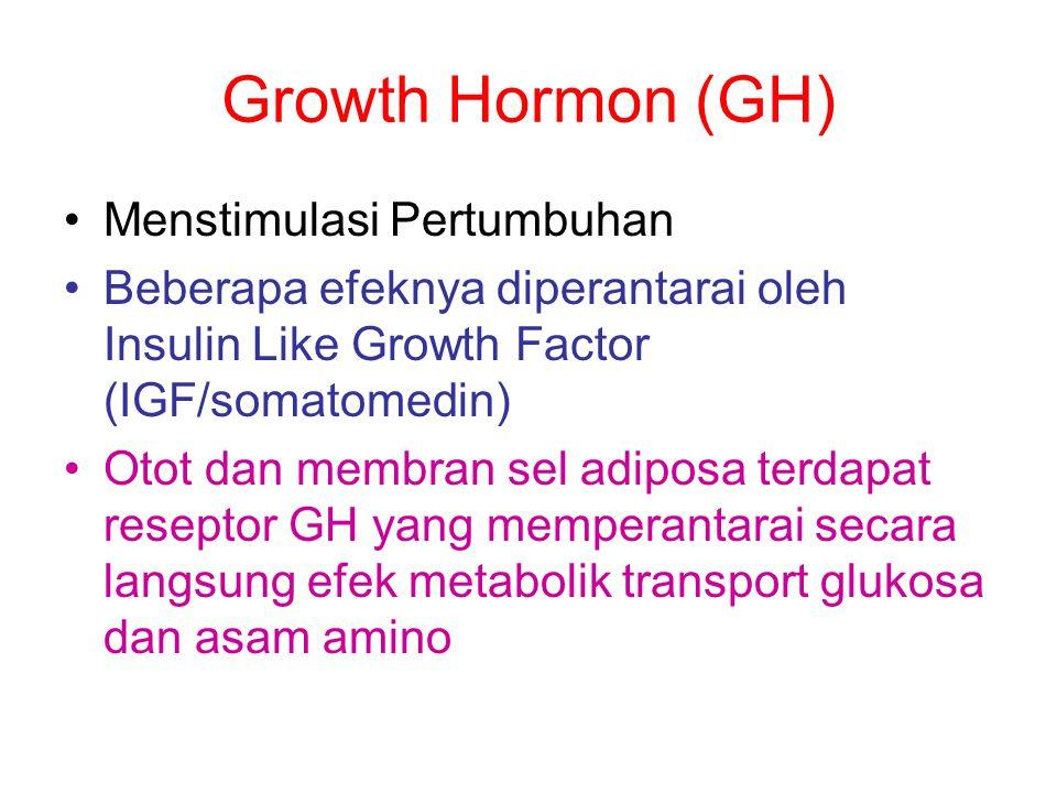 Growth Hormon (GH) Menstimulasi Pertumbuhan