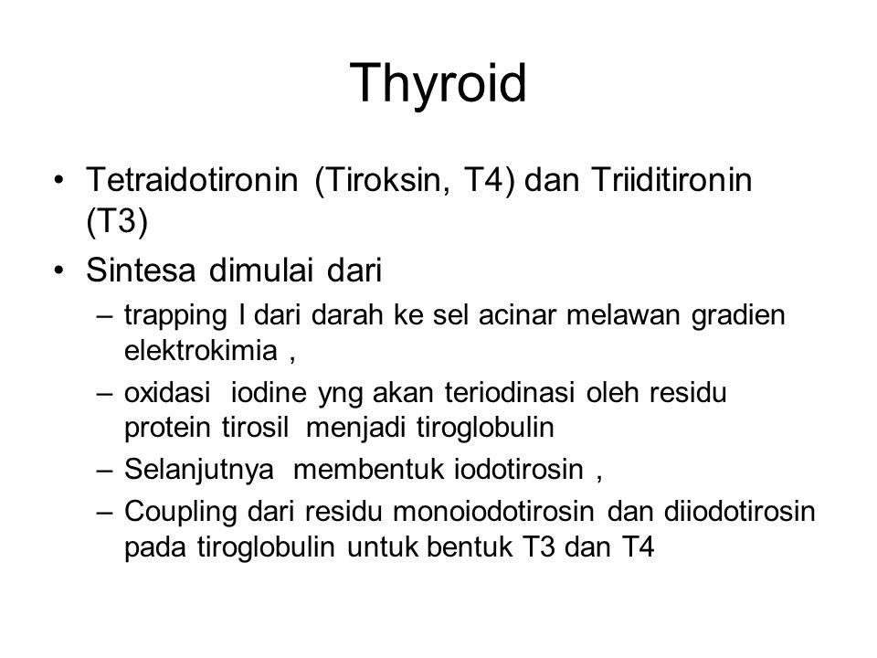 Thyroid Tetraidotironin (Tiroksin, T4) dan Triiditironin (T3)