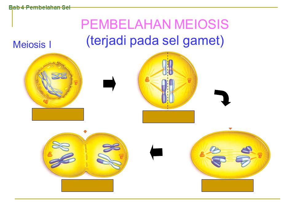 PEMBELAHAN MEIOSIS (terjadi pada sel gamet)
