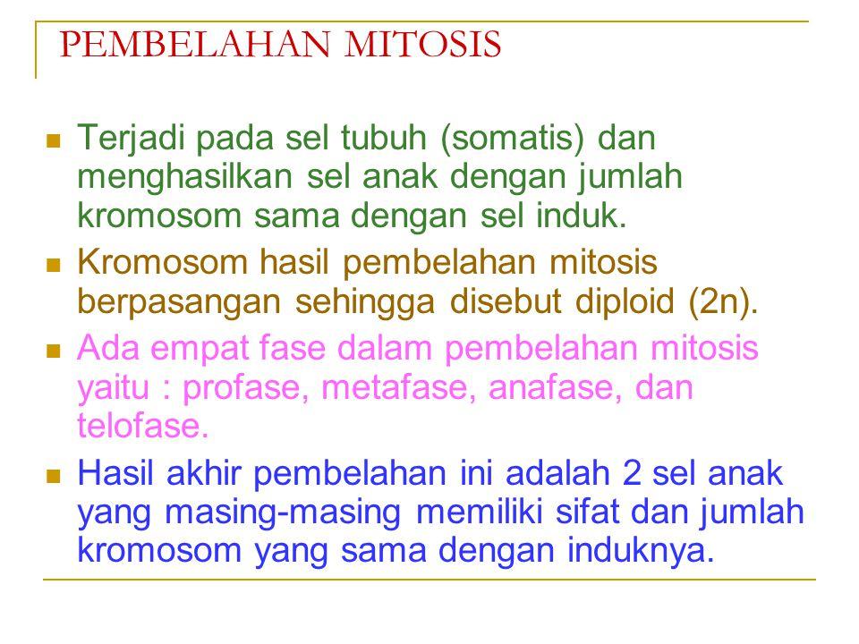PEMBELAHAN MITOSIS Terjadi pada sel tubuh (somatis) dan menghasilkan sel anak dengan jumlah kromosom sama dengan sel induk.