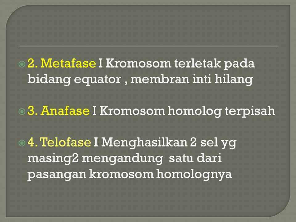 2. Metafase I Kromosom terletak pada bidang equator , membran inti hilang