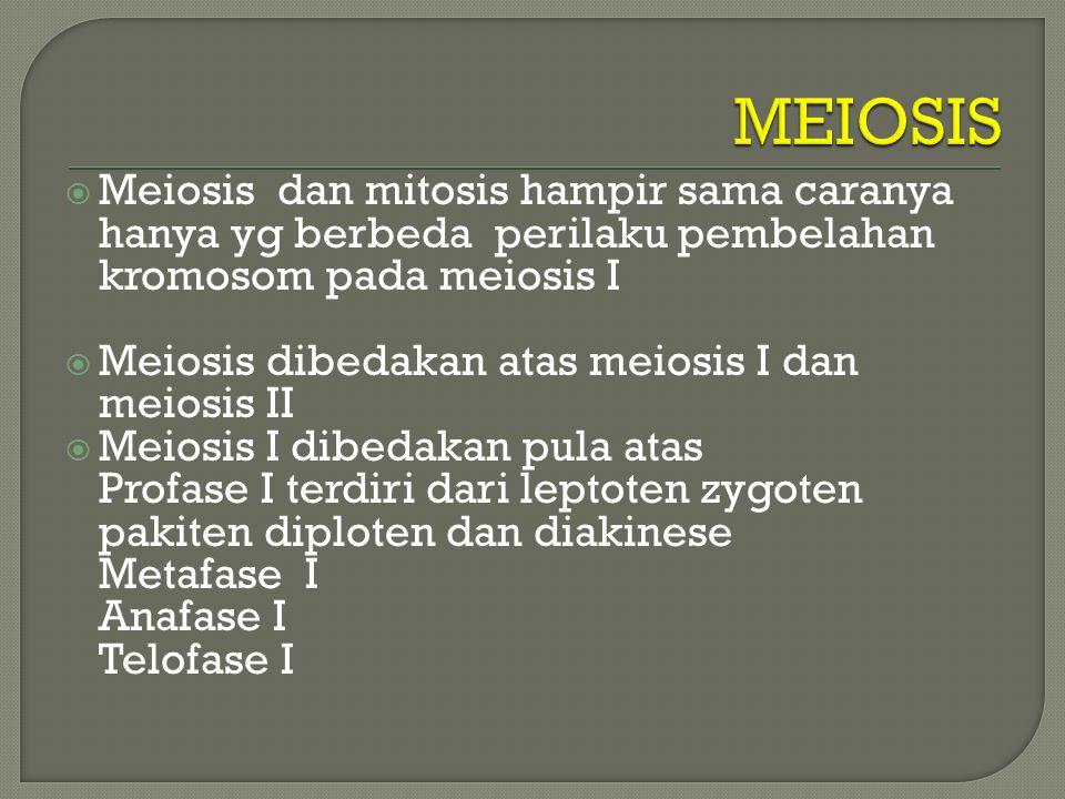 MEIOSIS Meiosis dan mitosis hampir sama caranya hanya yg berbeda perilaku pembelahan kromosom pada meiosis I.