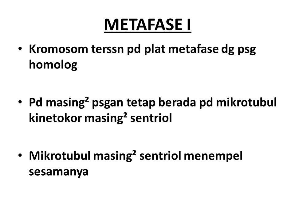 METAFASE I Kromosom terssn pd plat metafase dg psg homolog