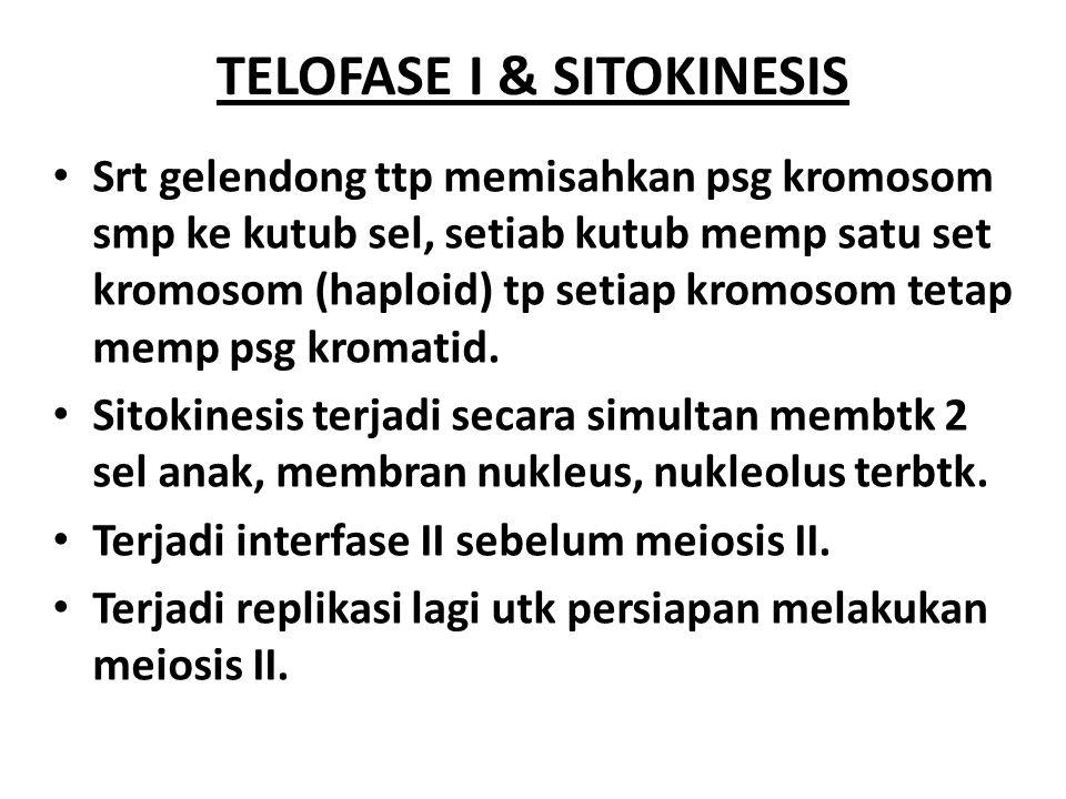 TELOFASE I & SITOKINESIS