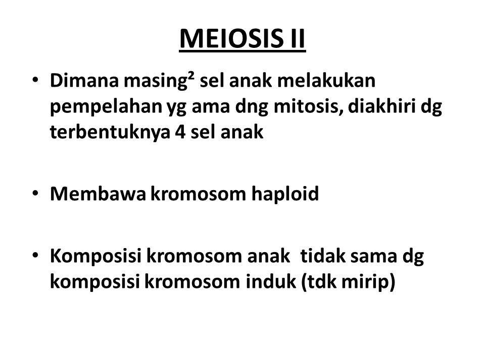 MEIOSIS II Dimana masing² sel anak melakukan pempelahan yg ama dng mitosis, diakhiri dg terbentuknya 4 sel anak.