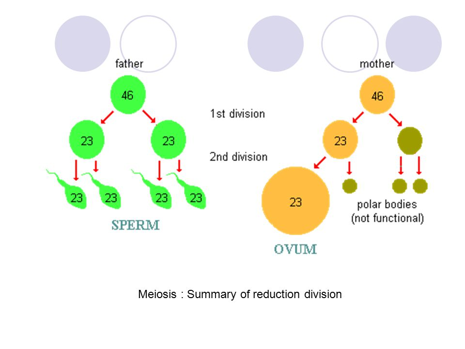 Meiosis : Summary of reduction division