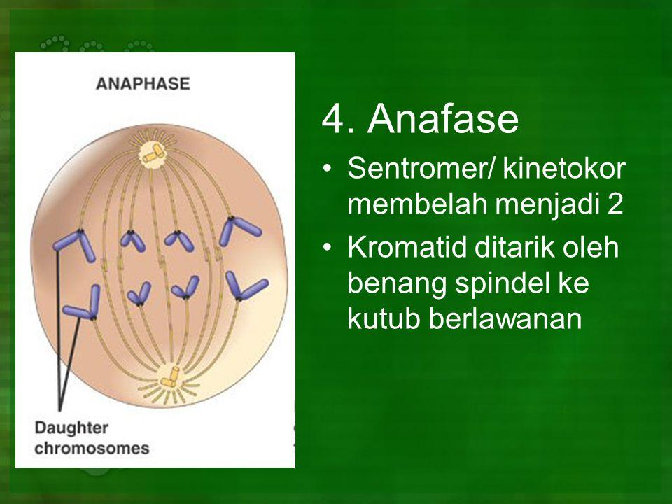 4. Anafase Sentromer/ kinetokor membelah menjadi 2