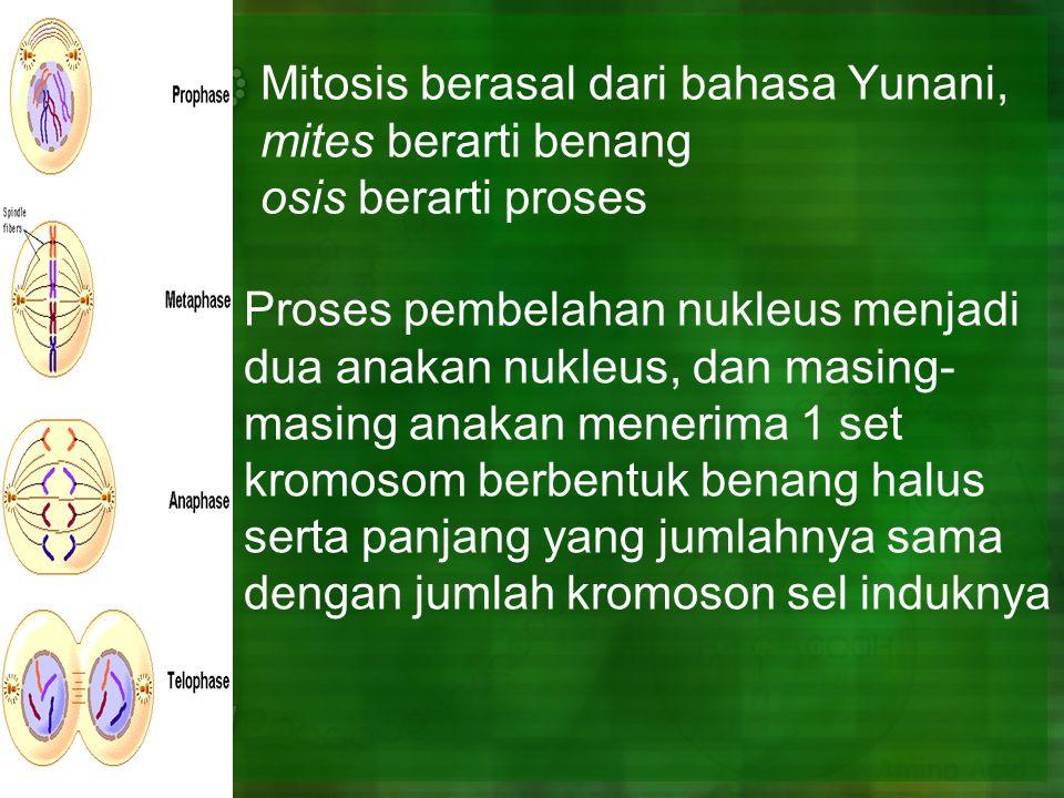 Mitosis berasal dari bahasa Yunani, mites berarti benang osis berarti proses