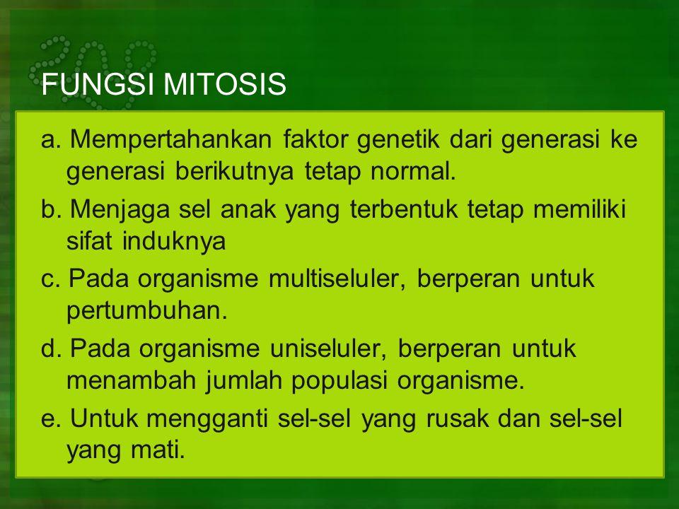 FUNGSI MITOSIS