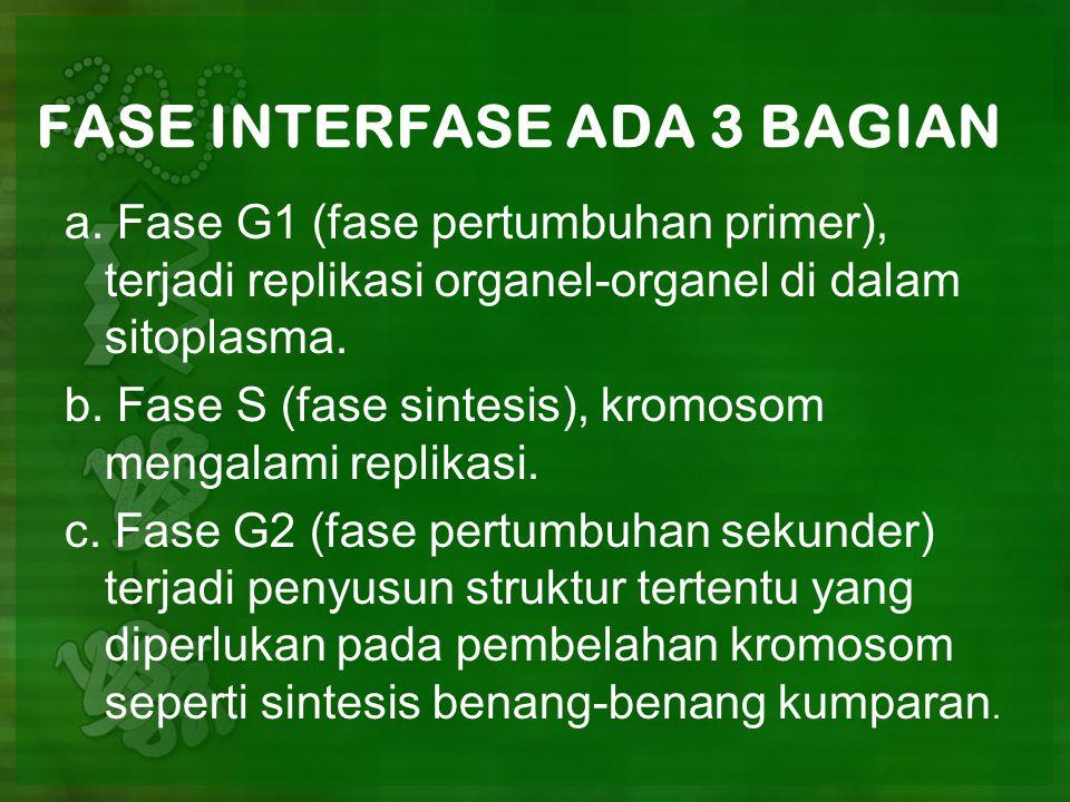 FASE INTERFASE ADA 3 BAGIAN