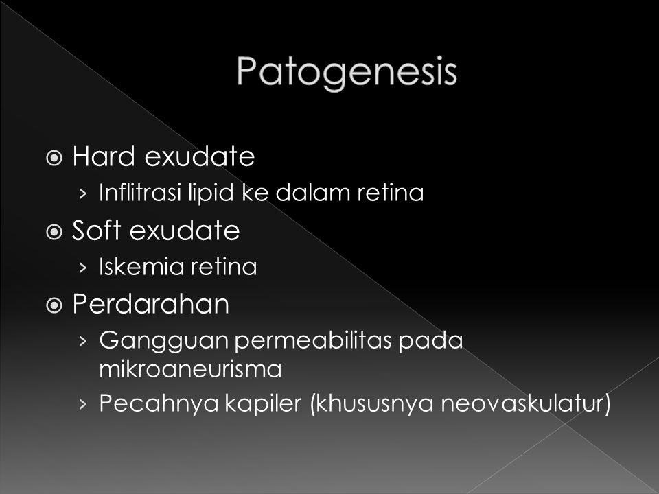 Patogenesis Hard exudate Soft exudate Perdarahan