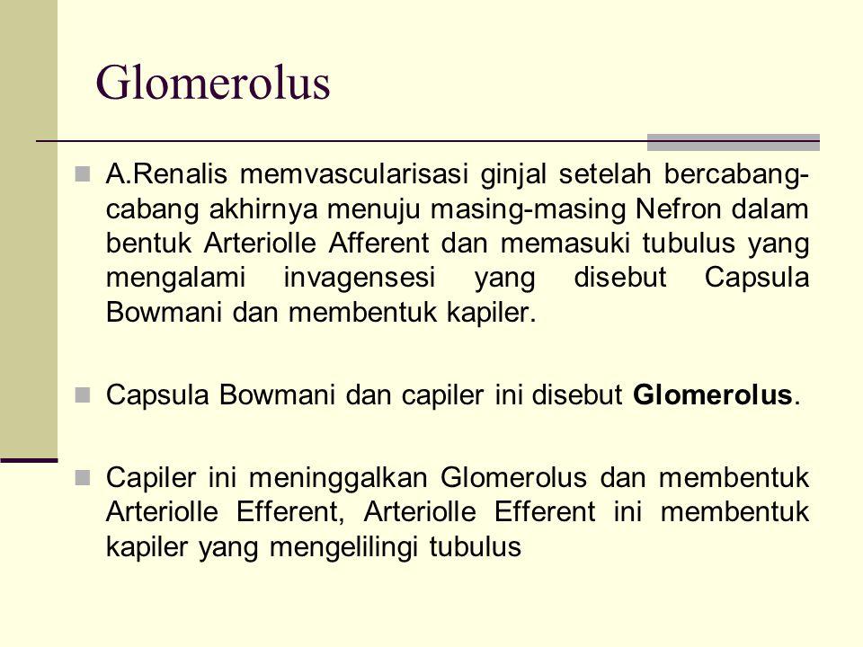 Glomerolus