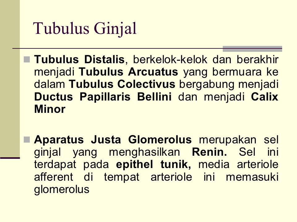 Tubulus Ginjal