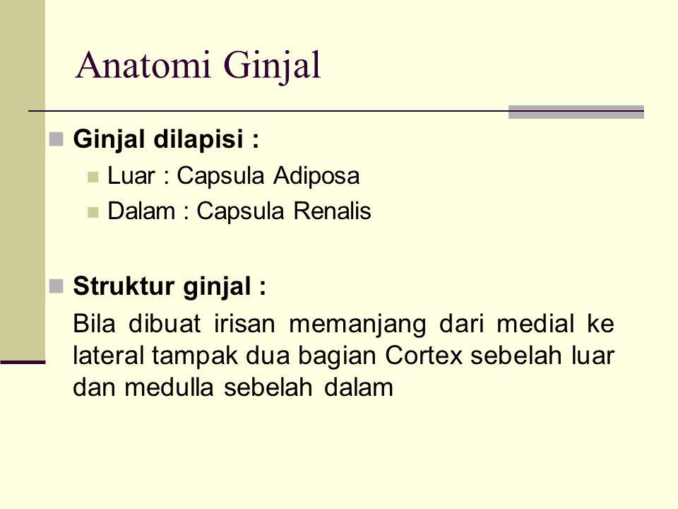 Anatomi Ginjal Ginjal dilapisi : Struktur ginjal :