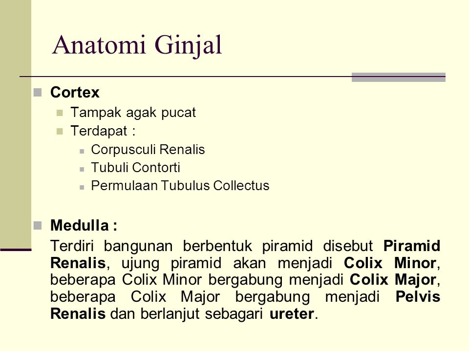 Anatomi Ginjal Cortex Medulla :