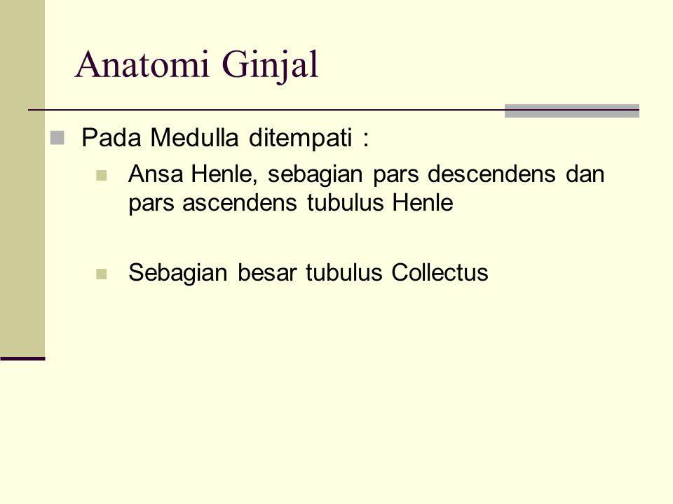 Anatomi Ginjal Pada Medulla ditempati :