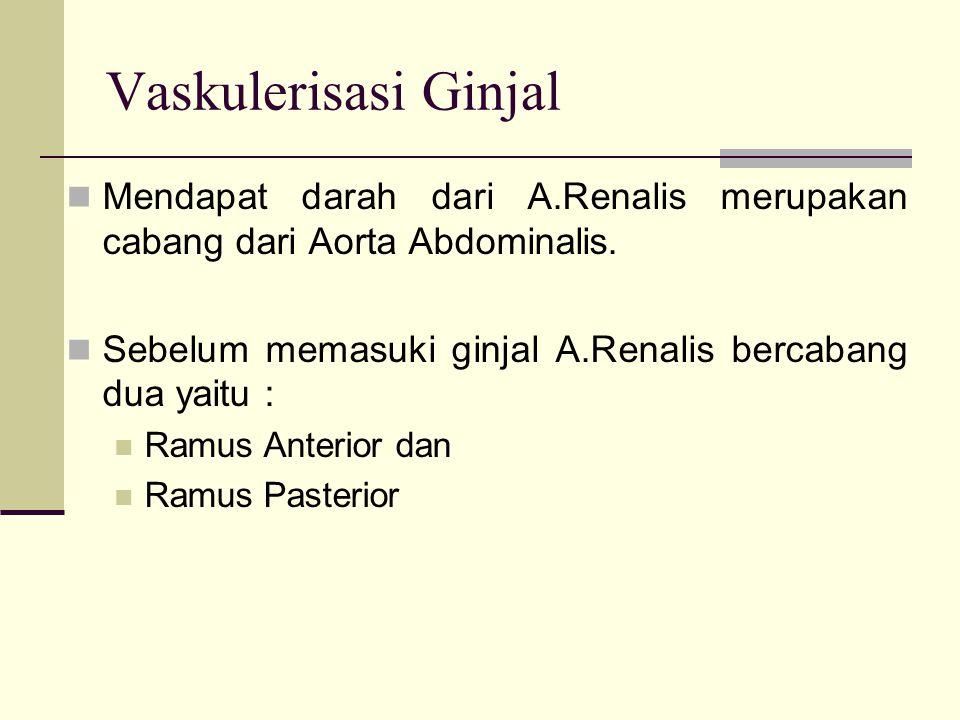 Vaskulerisasi Ginjal Mendapat darah dari A.Renalis merupakan cabang dari Aorta Abdominalis. Sebelum memasuki ginjal A.Renalis bercabang dua yaitu :