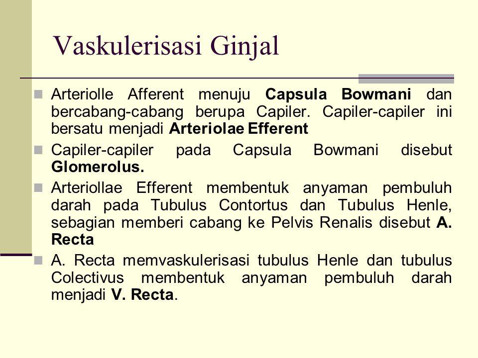 Vaskulerisasi Ginjal