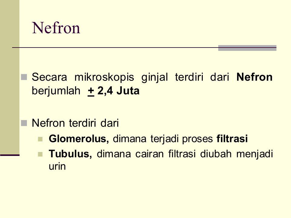Nefron Secara mikroskopis ginjal terdiri dari Nefron berjumlah + 2,4 Juta. Nefron terdiri dari. Glomerolus, dimana terjadi proses filtrasi.