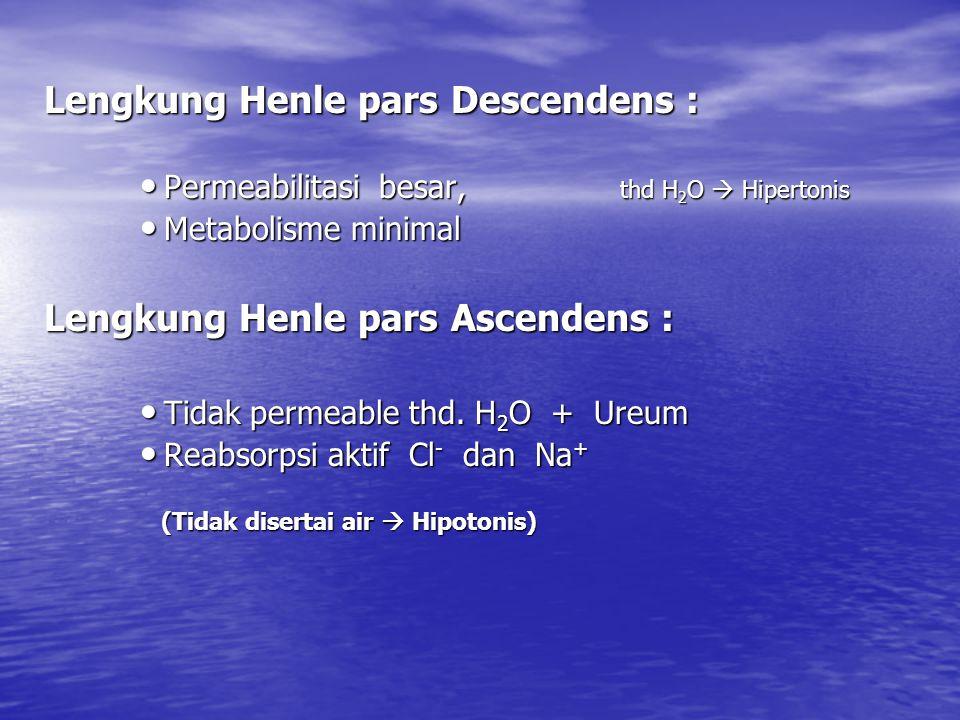 Lengkung Henle pars Descendens :