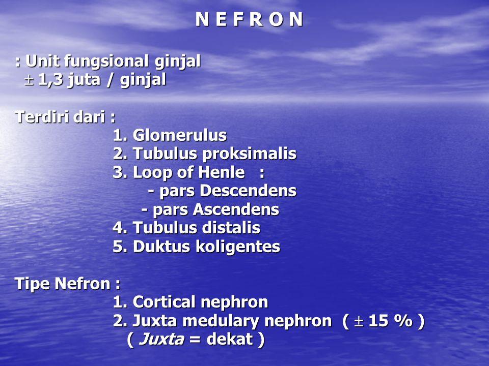 N E F R O N : Unit fungsional ginjal  1,3 juta / ginjal