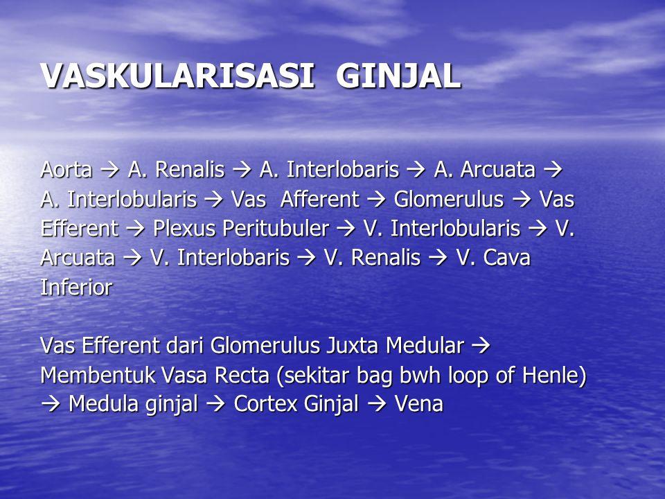 VASKULARISASI GINJAL Aorta  A. Renalis  A. Interlobaris  A. Arcuata  A. Interlobularis  Vas Afferent  Glomerulus  Vas.