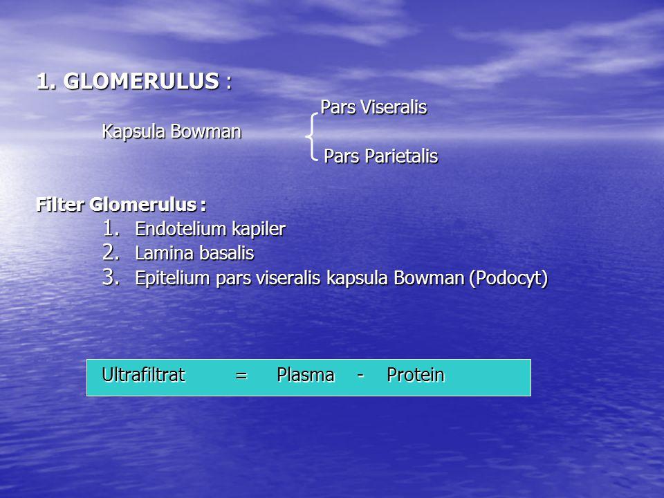 1. GLOMERULUS : Kapsula Bowman Pars Parietalis Filter Glomerulus :