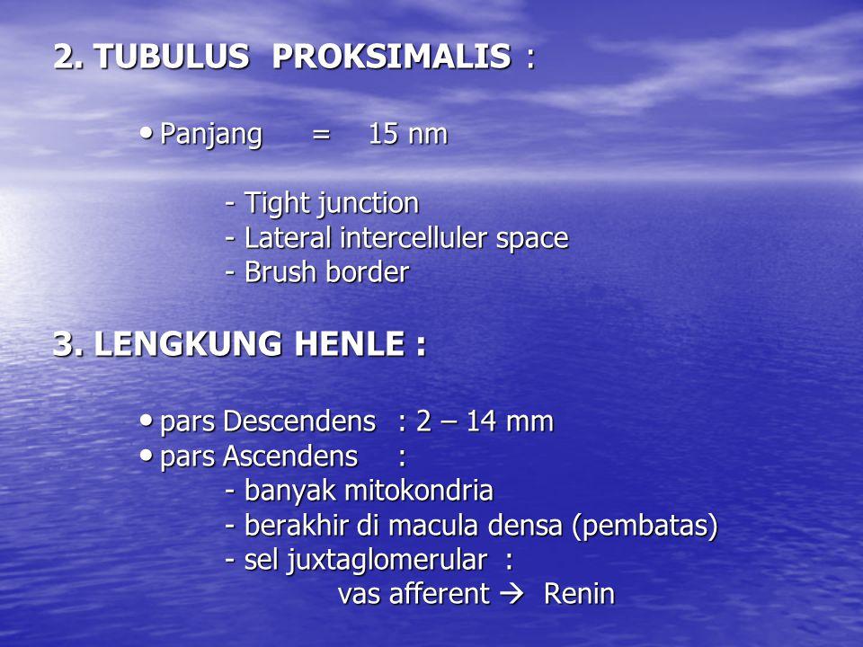 2. TUBULUS PROKSIMALIS : 3. LENGKUNG HENLE : Panjang = 15 nm