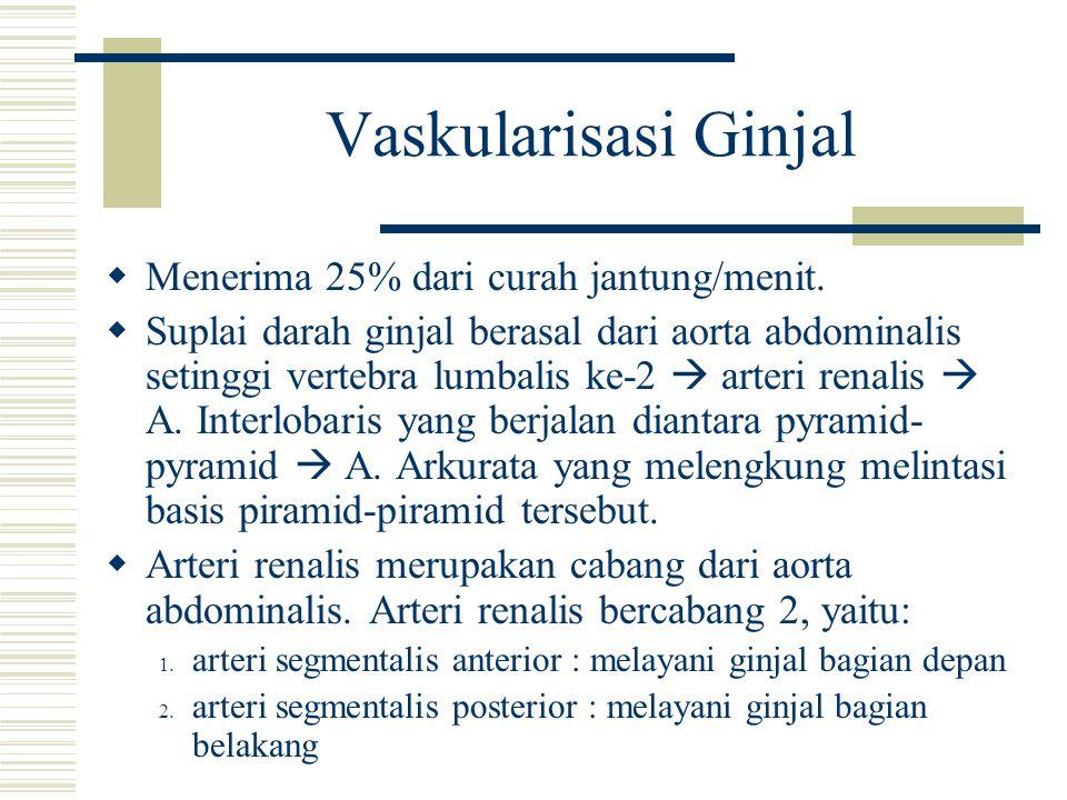 Vaskularisasi Ginjal Menerima 25% dari curah jantung/menit.