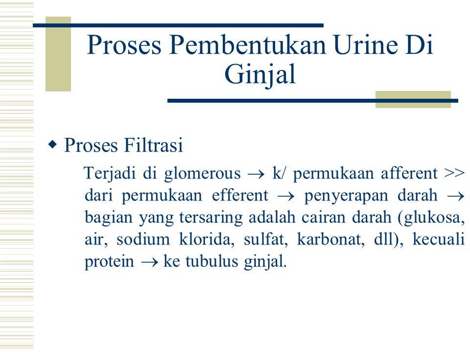 Proses Pembentukan Urine Di Ginjal