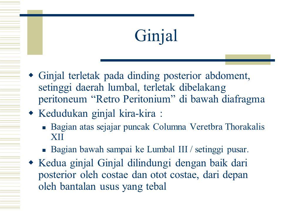 Ginjal Ginjal terletak pada dinding posterior abdoment, setinggi daerah lumbal, terletak dibelakang peritoneum Retro Peritonium di bawah diafragma.