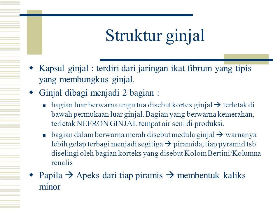 Struktur ginjal Kapsul ginjal : terdiri dari jaringan ikat fibrum yang tipis yang membungkus ginjal.