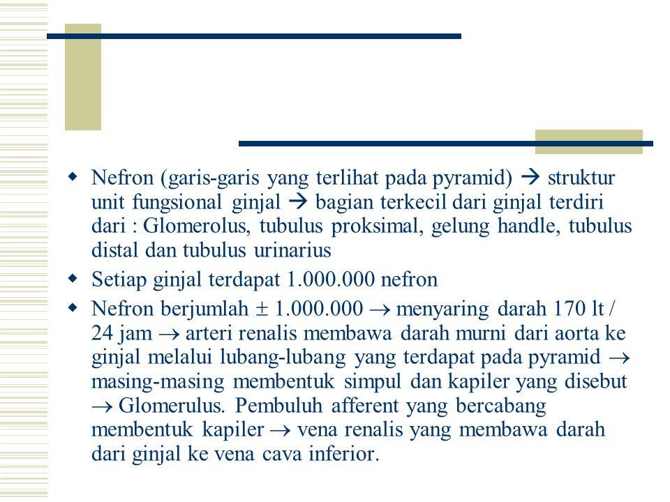 Nefron (garis-garis yang terlihat pada pyramid)  struktur unit fungsional ginjal  bagian terkecil dari ginjal terdiri dari : Glomerolus, tubulus proksimal, gelung handle, tubulus distal dan tubulus urinarius